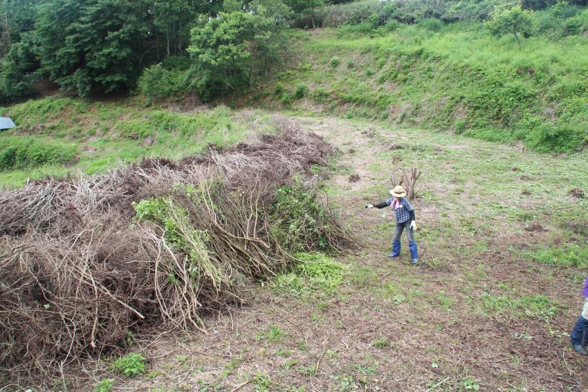 1年目はお茶の木を伐採するところから始まった
