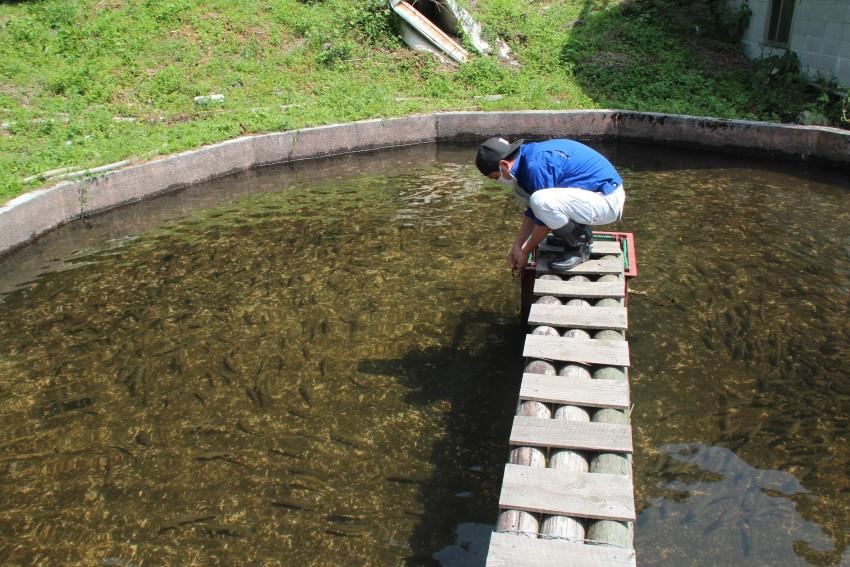 魚と池の健康チェックには気を使う。あと花粉にも・・・