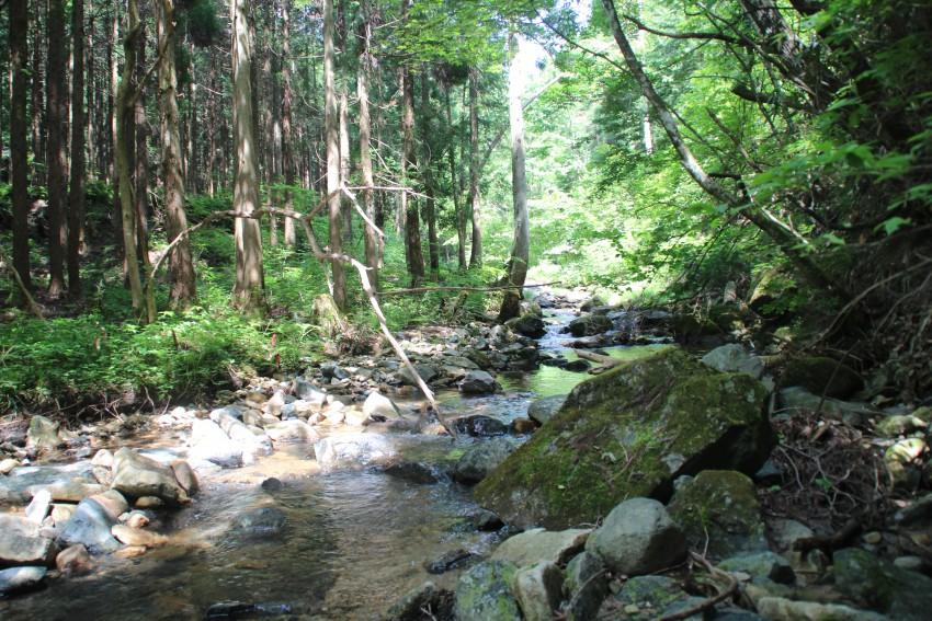 ここから養魚池に水を引いている。高梁川の源流。