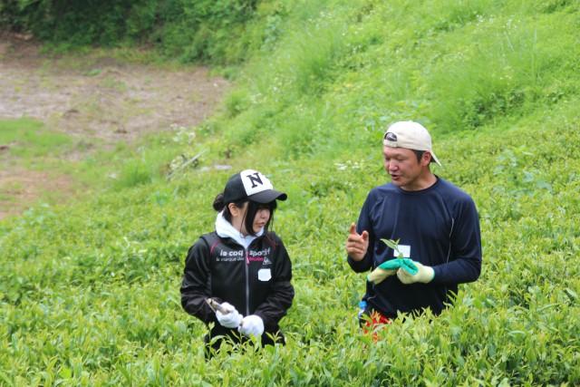 学生にもお茶畑の管理に参加してもらい、教育を行っている