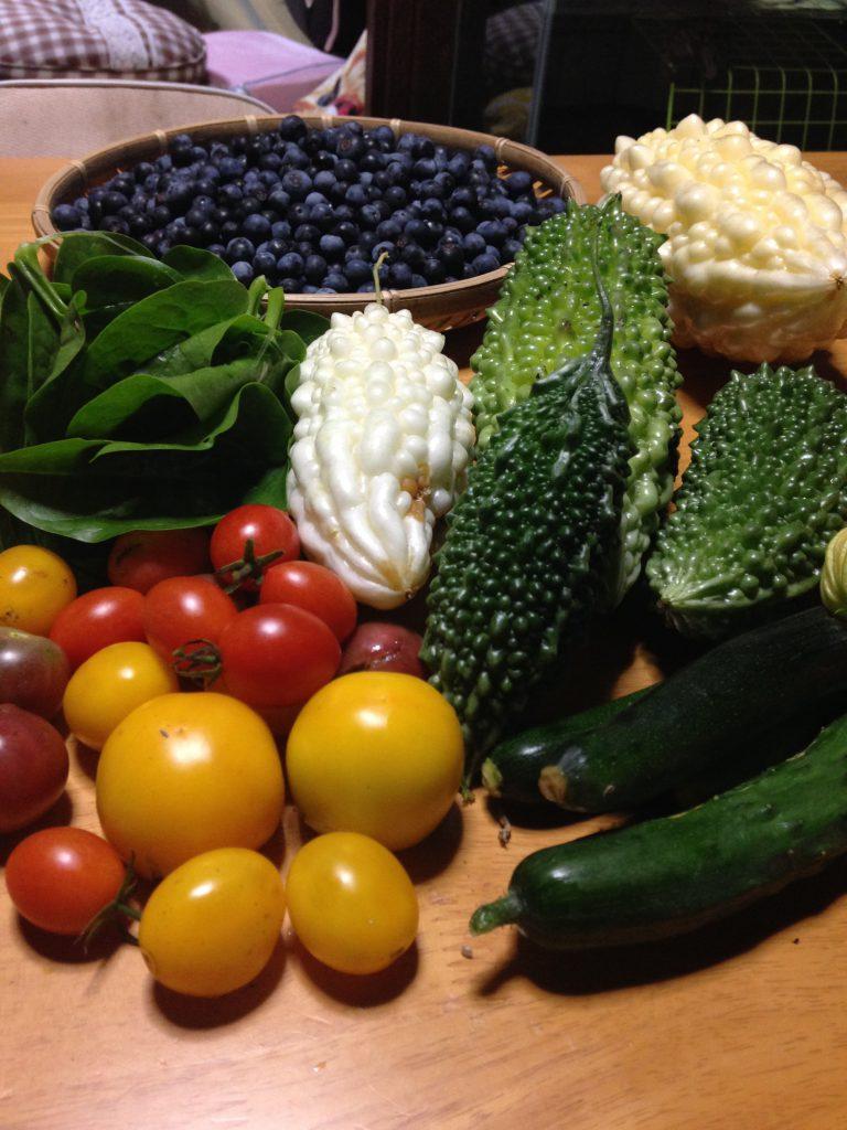 簡単に栽培できる夏野菜