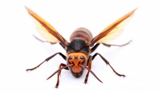 田舎暮らしはハチに注意
